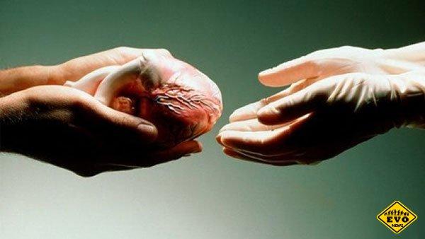 Пересадка сердца — пересадка личности?