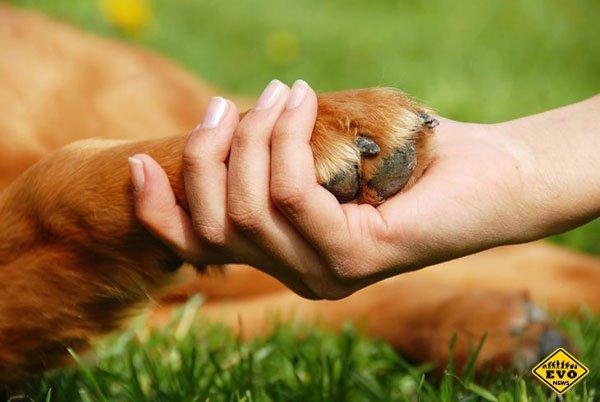 Что нужно учитывать перед тем, как взять из приюта собаку