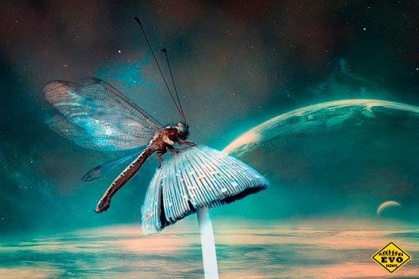 Снимки насекомых в необычной обработке