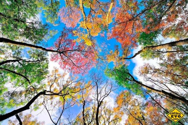 Осень фантастически прекрасна