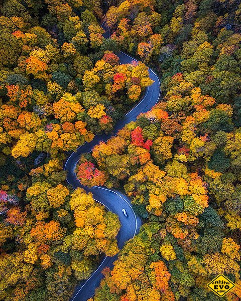 Осеннй лес в США