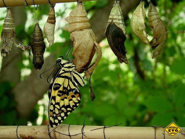 Он думал, что помогает бабочке. Но результат оказался абсолютно противоположным!