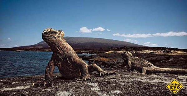 Интересные факты об острове Дарвин