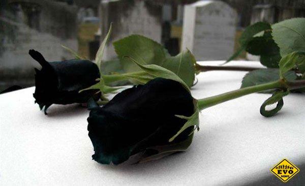 Сказочно красивые чёрные розы