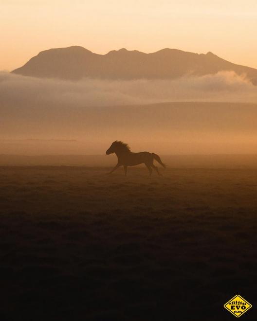 Донал Бойд – не только профессионал в жанре туристической и пейзажной фотографии, но и человек, увлечённый охраной природы, диких животных и океана. Ч