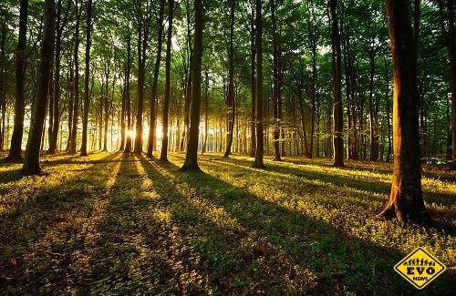 """ИнÑ'ересные Ñ""""акÑ'Ñ‹ о лесах и деревьях"""